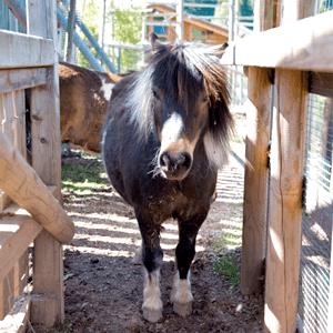 Pony und Tiere bei Weißers Floraparadies, Ausflugsziel in Schabenhausen